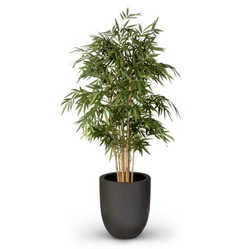 Bambus - 170 cm